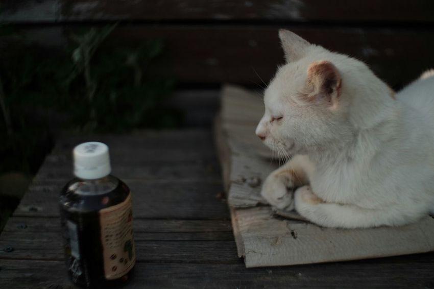 My girlfriend gone wild Street Cats Streetcat Cat Cats Cat♡ FUJIFILM X-T1 Fuji X-T1 Carl Zeiss Jena Pancolar 50mm F2 Vintage Lenses