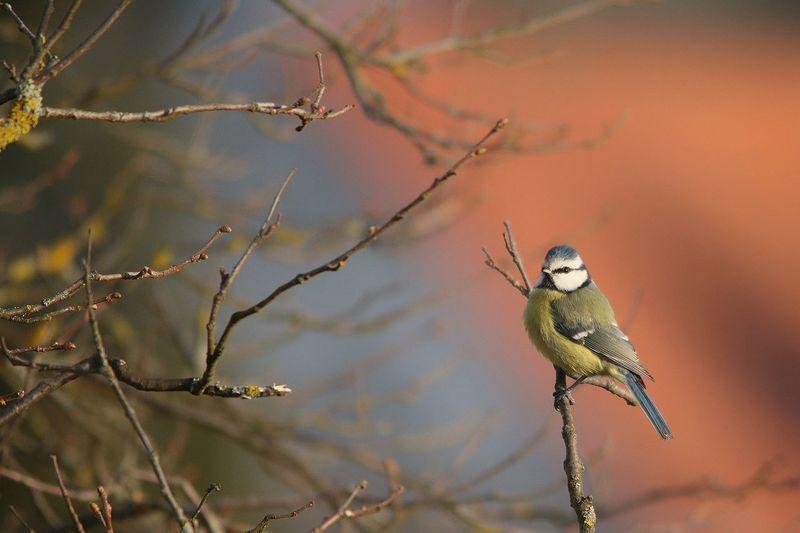 *Wintertag* Warten auf etwas, von dem nichts mehr ich weiß. Nur ahnend Bilder voll Wärme und Licht. Schneeglöckchen ungeduldig im schmutzigen Schnee. Wie lange noch? (© Manfred Poisel) Ich weiß ja nicht, wie es euch so geht, aber nach den Sonnenstrahlen der letzten Tage werde auch ich so langsam ungeduldig... Frühling, ich sehne mich nach dir!!! Animal Themes Animal Wildlife Animals In The Wild Bare Branches Bare Tree Bird Birds Of EyeEm  Birds_collection Birds_n_branches Birdsofinstagram Birds🐦⛅ Eye4nature Eye4photography  EyeEm Nature Lover Hello World ✌ Poetry In Pictures Untamed Heart Waiting Waiting For Spring My Garden Is A Wonderland Ladyphotographerofthemonth