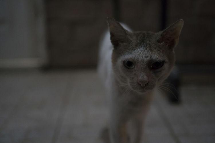 Stray Cat: