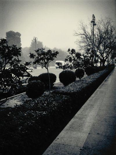 Baku Cavid Parki Baku♡♥ Misty Morning Misty