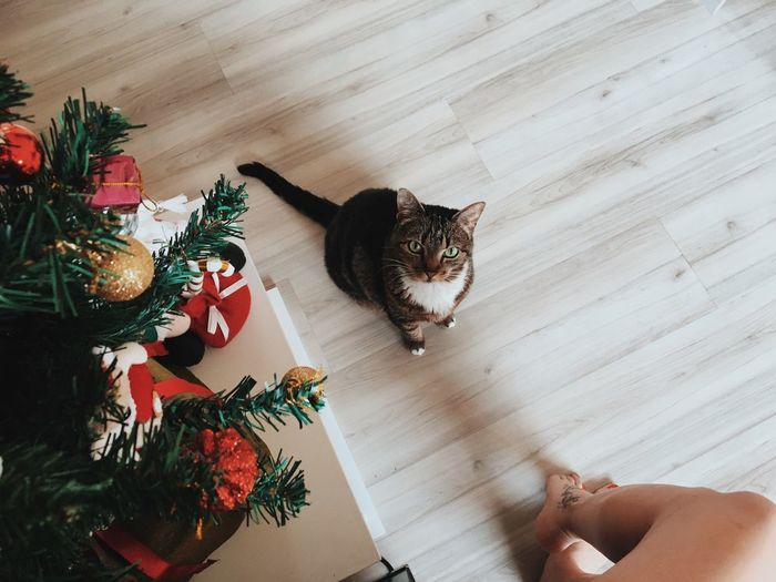 High angle view of young woman with christmas tree at home