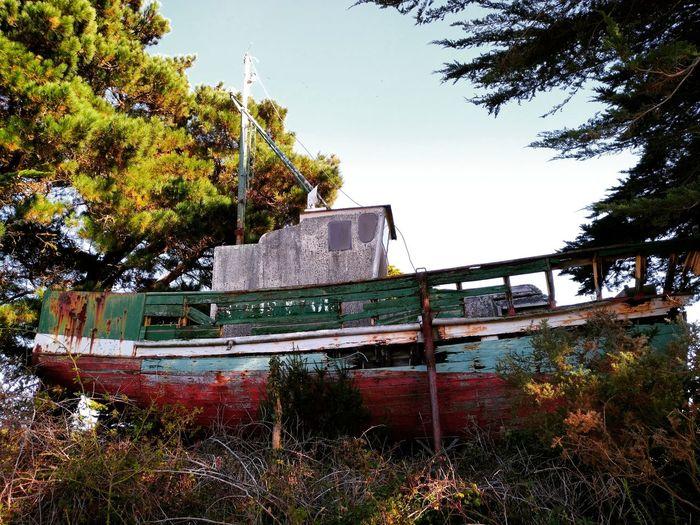 Old Boat Tree Outdoors No People Nature Vieux Bateau Epaves De Bateaux Epave Bateau