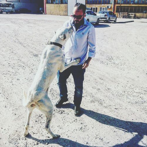 Kayseri Kayseri, Turkey Adults Only Dog Outdoors Warriors Beauty Sexy♡ Sexys Sexymen People Love To Take Photos ❤ Real People One Animal Adult ®o©!?. Tradition Bestoftheday Standing
