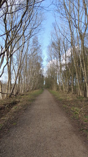 the first trainline route In The WorldBare Tree Beauty In Nature Day Diminishing Perspective Empty Footpath Growth Landscape Long Nature No People Non-urban Scene Outdoors Scenics Sky The Way Forward Tranquil Scene Tranquility Tree Tree Trunk Treelined Vanishing Point