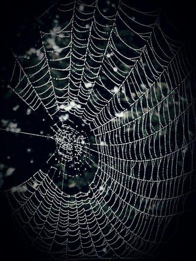 Fall Beauty Misty morning cobweb