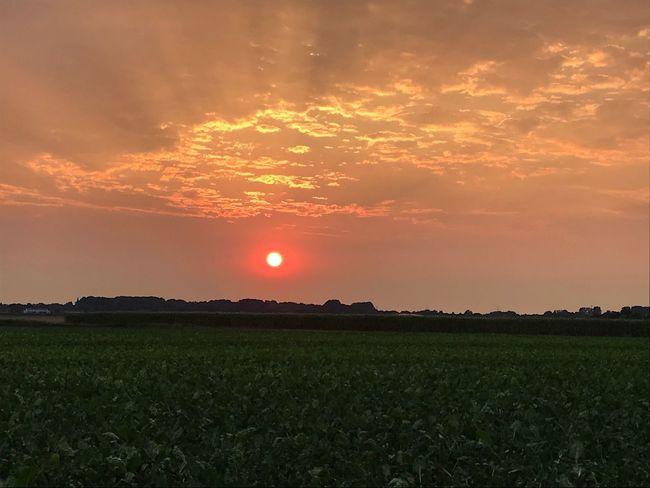 Sunset Or Sunrise? Nobody knows ... Sunbeams Through Clouds Sunbeam Real Photography Summer Sunrise Scenics - Nature Sky Beauty In Nature Sunset Field Cloud - Sky Tranquil Scene Land Environment Orange Color Nature Landscape Rural Scene Idyllic No People Sun