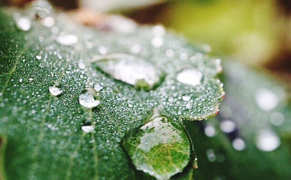Ein Regentag 💦💧☔️ Drop Water Wet Nature Rain Fragility Dew Close-up Freshness RainDrop Beauty In Nature Macro Purity No People Growth Leaf Plant Rainy Season Flower Day My World ♥ Beauty In Nature Lovely Macro Nature Focus On Foreground