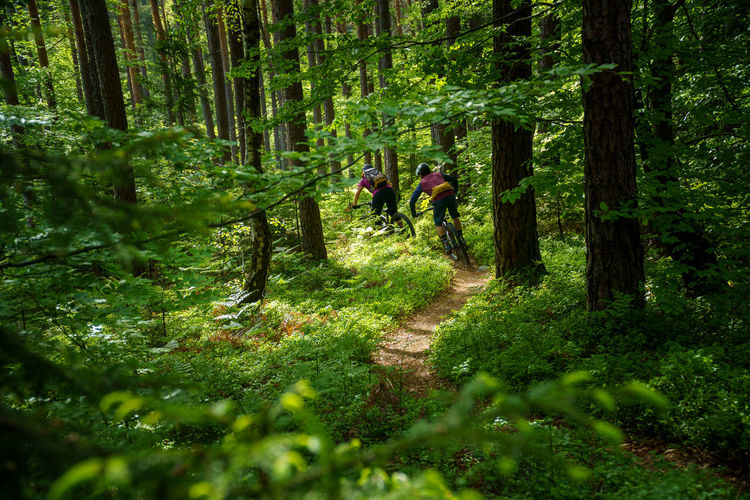 A young woman and a young man riding their mountain bikes on a singletrail near klagenfurt, austria.