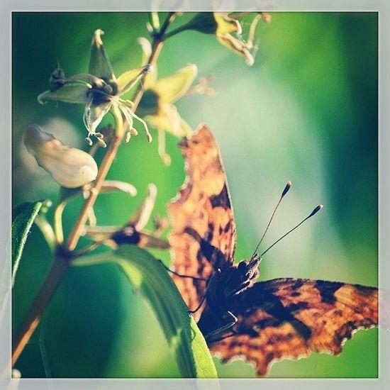 Comma Butterfly Butterfly Comma Instagram