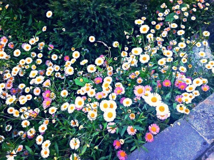 Flowers Taking Photos