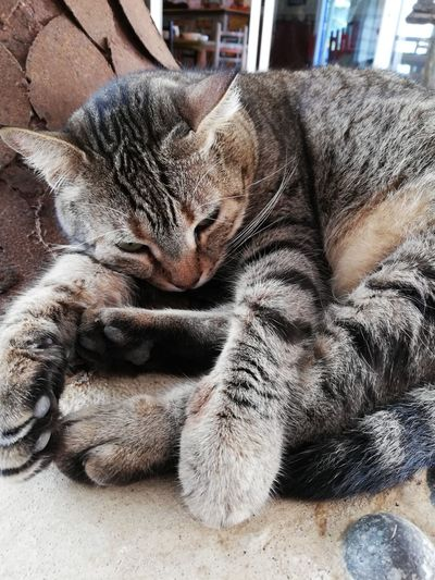 Pets Domestic Cat Feline Relaxation Close-up