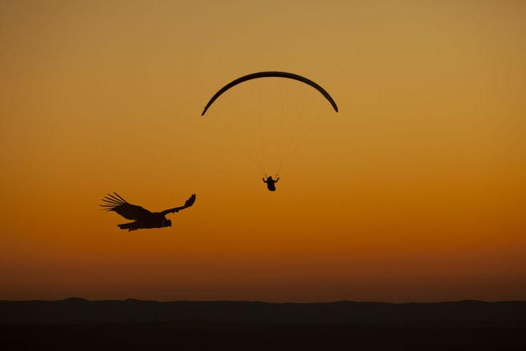 Silhouette of birds flying against orange sky