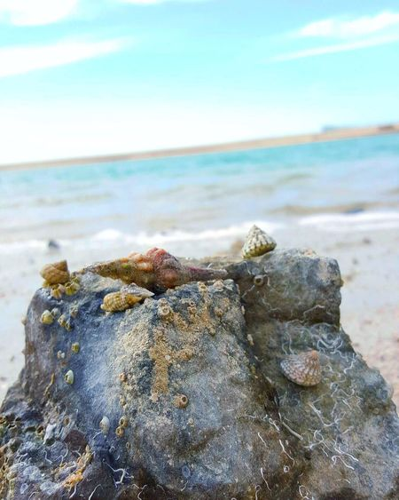 The beach is your second home 💙 Sea Water Nature Beach Beauty In Nature Shell Shells Rock Rock And Sea Rock And Shells Live For The Story