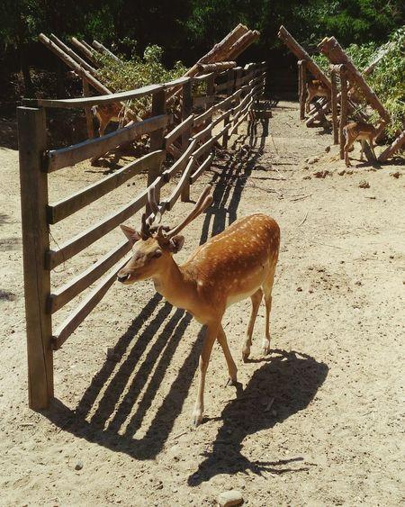 Deer Deer Park Nature Zoo Bulgaria