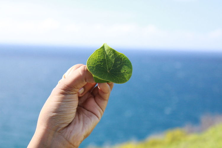 Close-up of hand holding leaf against sea