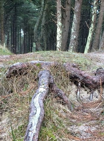 Wexford Forest The Raven Nature Reserve Ireland