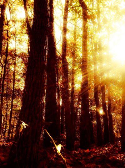 Nature Trees