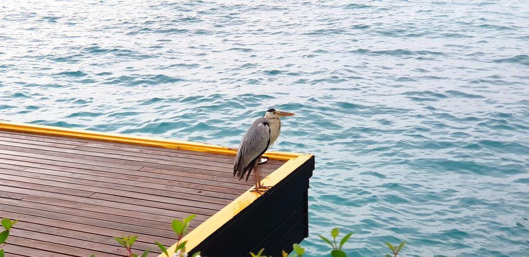 Bird perching on sea