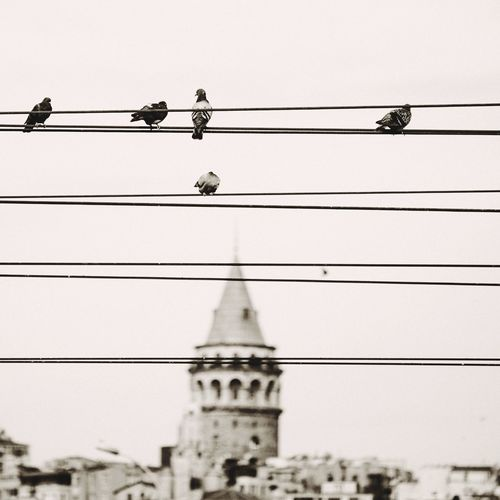 Galatakulesi Galatatower Galata Istanbul Birds Bird Photography EyeEm Bird Lover
