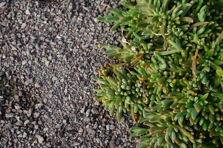 nature's colors 2 Backyard Contrast In Nature Contrasting Colors Black And Green Stones Plants No Filter