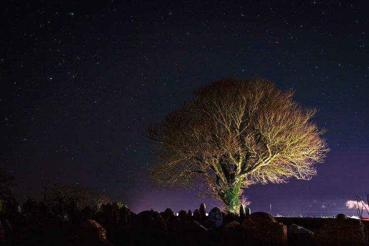 Low angle view of tree against a star filled sky at night