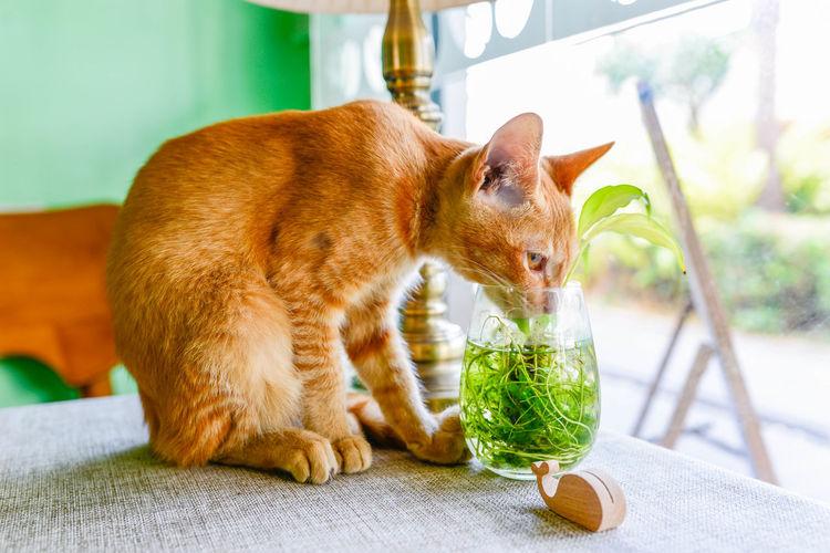 Animal Animal Themes Day Domestic Animals Domestic Cat Feline Indoors  Mammal No People Pets