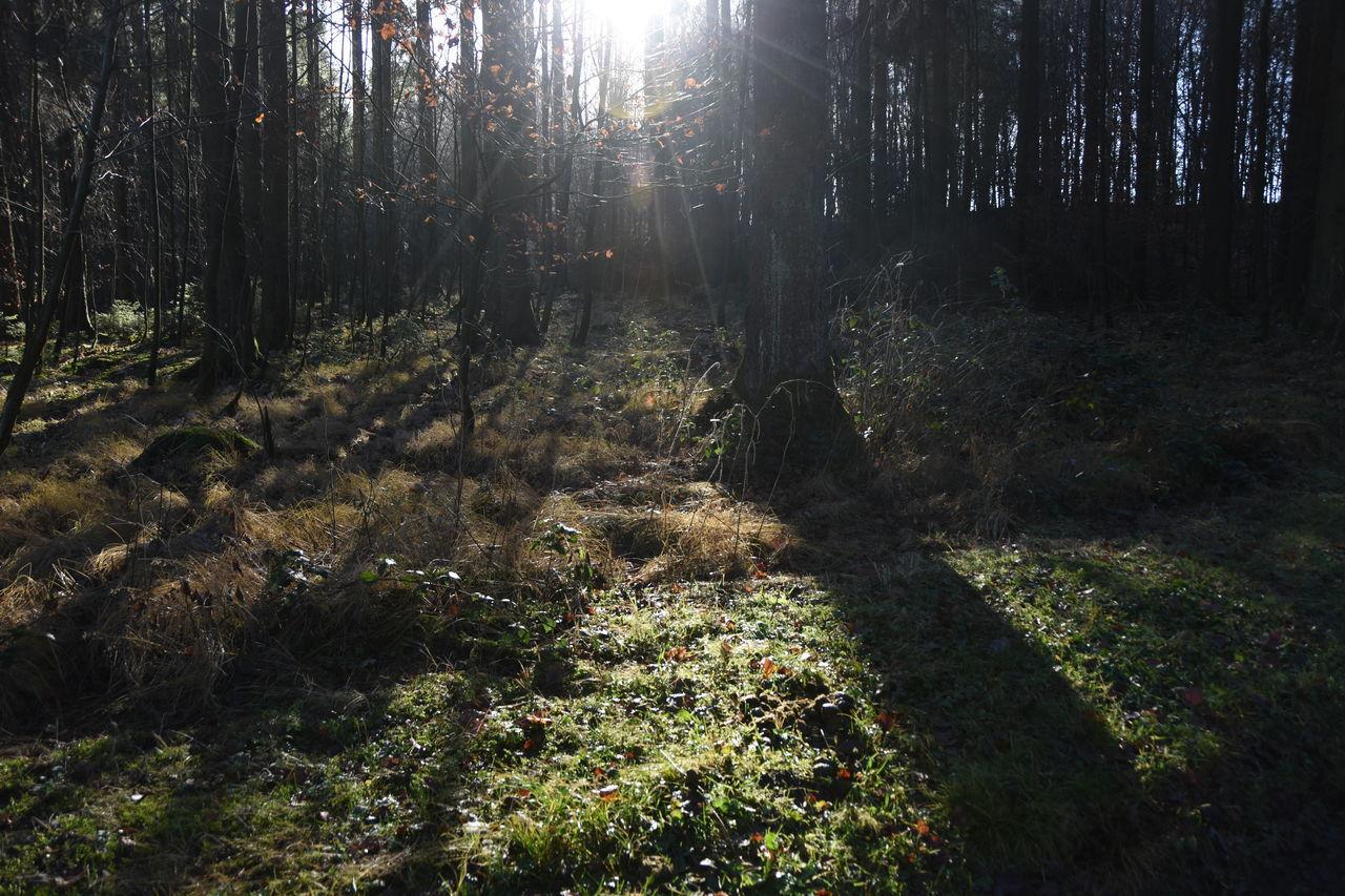 Tree Growing On Field In Forest