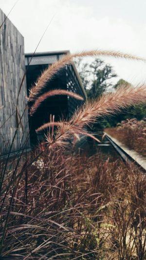 Saturdayafternoon  Grasses Urban Structures