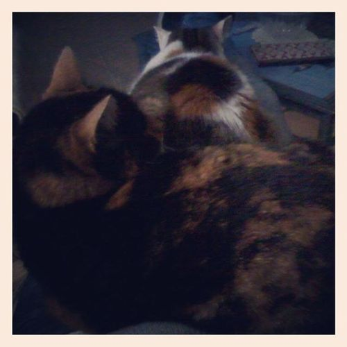 No importa el momento, ellas siempre estan ahi conmigo Misgordas Cats Kitten Catslover