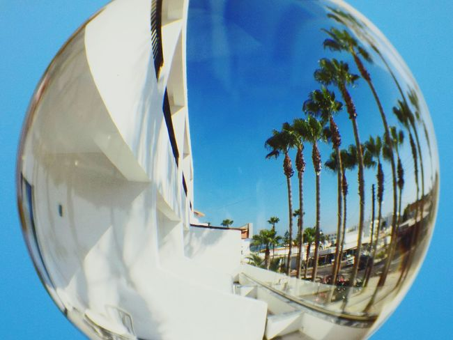 Palm Tree Sky Blue Day Summer Crystal Ball Reflection Street Curves Fish-eye Lens Tree Water Swimming Pool Palm Tree Clear Sky Blue Factory Sky Close-up Panoramic Urban Scene Skyline Building Calm