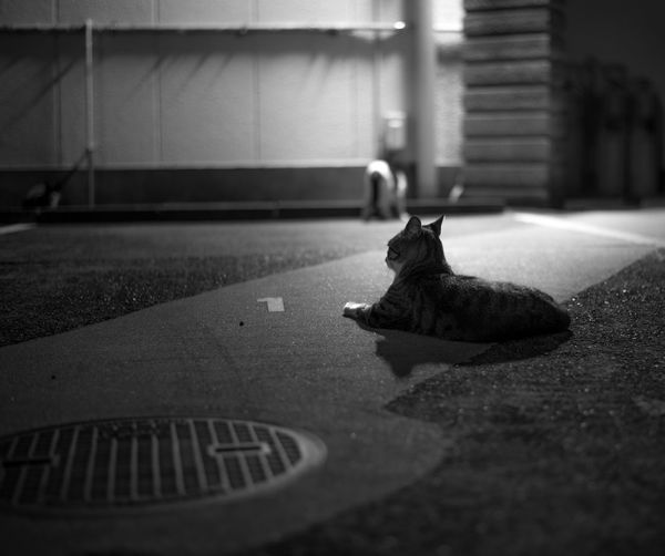 Cat Relaxing On Street At Night