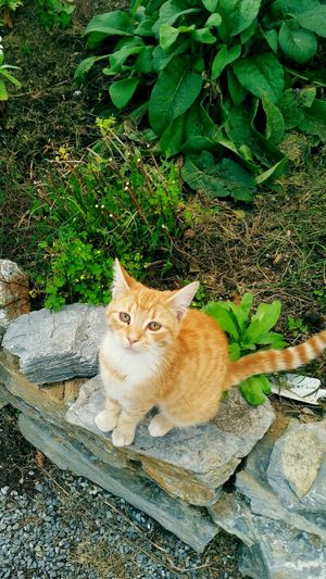 Feline One