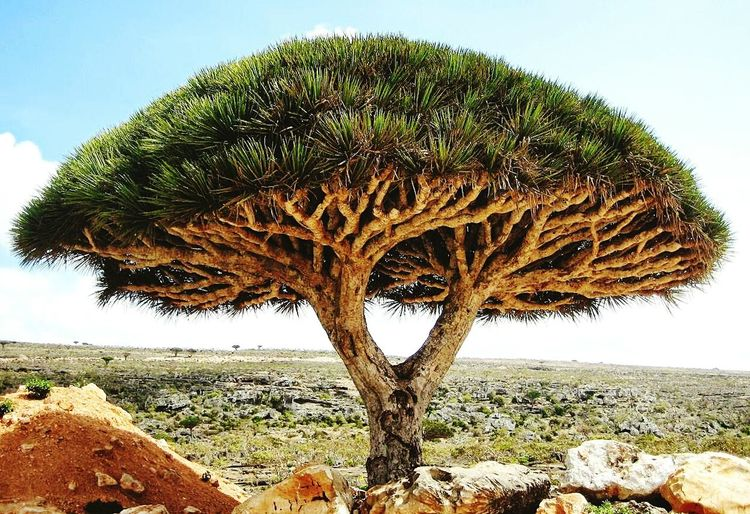 Nature Nature No People Outdoors Beauty In Nature Scenics Africa Mauritanie Landscape Travel Destinations Growth Idyllic
