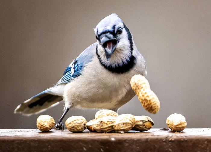 Falling nut