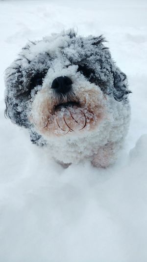 Dog Cold Temperature Snow Pets Winter One Animal Nature