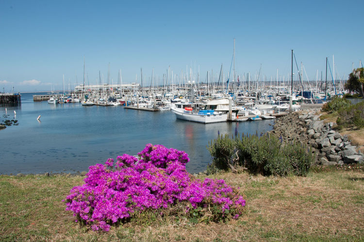 Marina in Spring Beauty In Nature Day Flower Flowering Plant Harbor Marina Mast Mode Of Transportation Moored Nature Nautical Vessel No People Outdoors Pink Color Plant Pole Sailboat Sea Sky Transportation Water Yacht