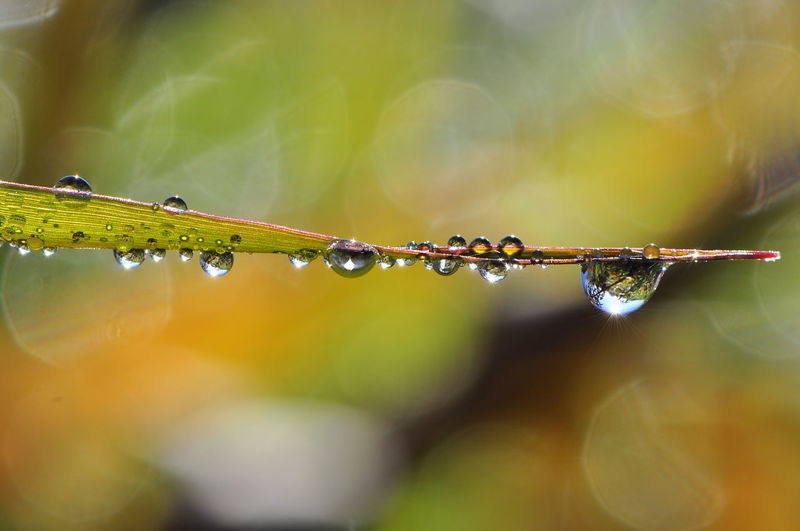 Close-up of water drops on plant during rainy season