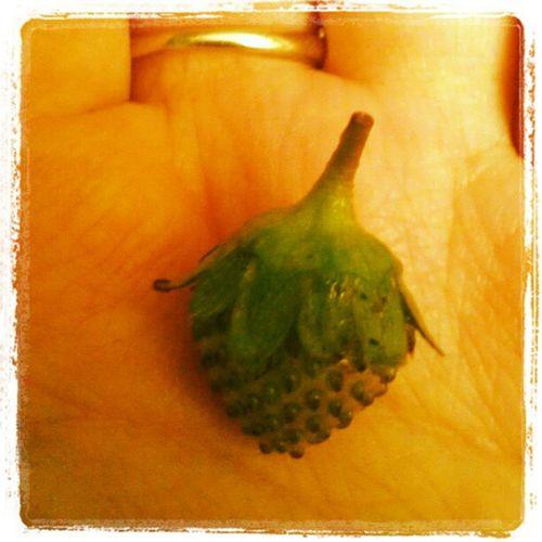 Baby strewberry Frutie Baby Strewberry
