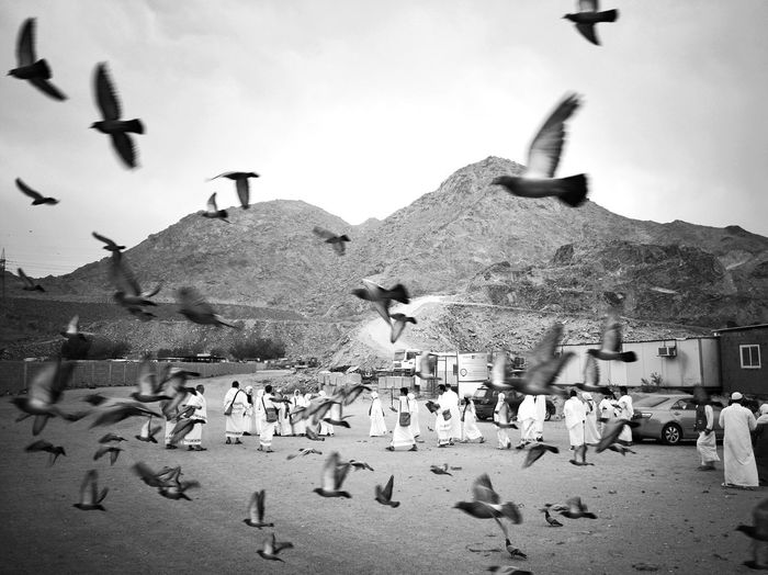 Journey of soul. Outdoors Bird Mountain Animal Themes Flying Large Group Of Animals Large Group Of People Street Photography Street Life Mecca Saudi Arabia Black & White Catch The Moment Traveling The World MeccaStreet Travelphotography Alharam Journey Of Life Black And White Photography Travelogue People On The Street Journey Of Souls Makkah Al Mukaramah Peaceful View Mobilephotography Xiaomimi5