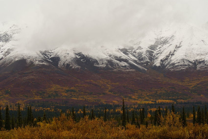Alaska Beauty In Nature Landscape Mountain Nature Outdoors Parks Hwy Tranquil Scene