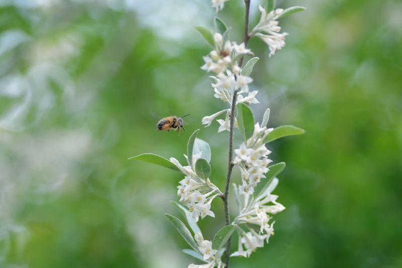 花と虫 花 Japan Flower TAMROM EyeEm 2015 Nikon D5200