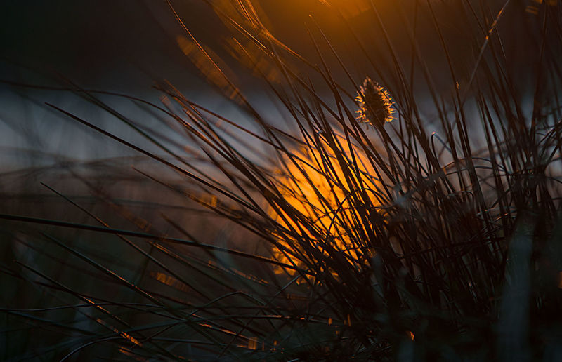 Art ArtWork Ball Beauty In Nature Beuty Close-up EyeEmNewHere Gold Golden Golden Hour Lake Macro Macro Photography Macro_collection Multi Colours Mysticism Nature Plants Reflection Romance Sun Sunset Sunset_collection Water