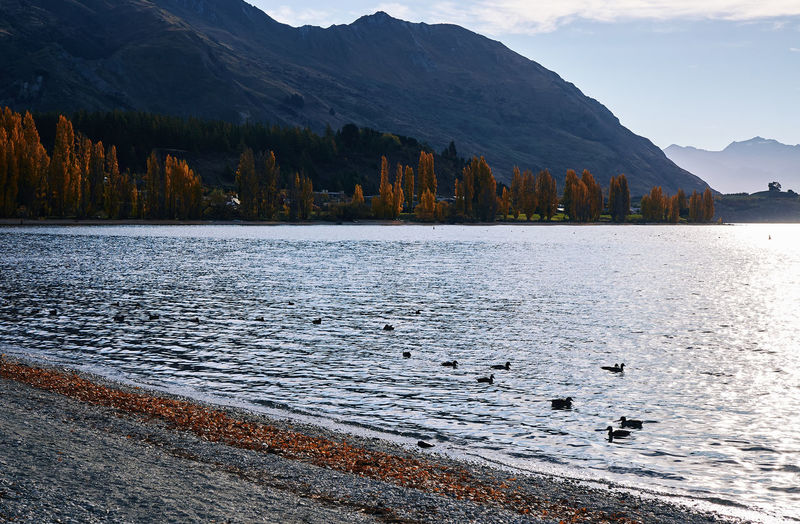 Birds swimming in lake by mountains against sky