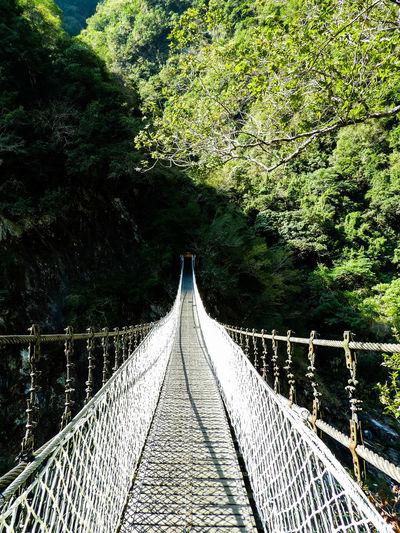 Footbridge over trees in forest
