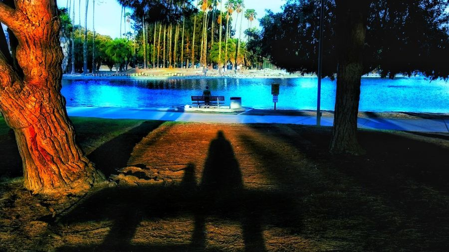 A day in the park Water Tree Reflection Nature Outdoors Shadow No People Swimming Pool Growth Beauty In Nature Sky Day First Eyeem Photo