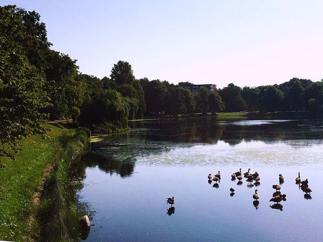 Kiel Meer Sea Ducks Patos Enten Sommerfeeling Sommer Summer Verano