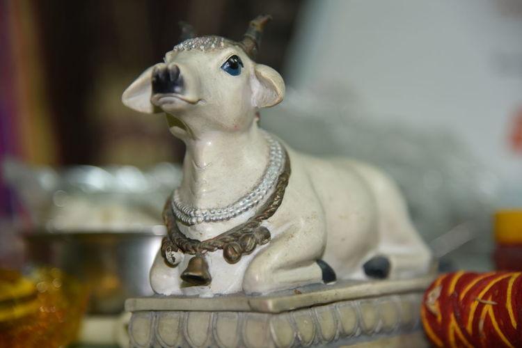 EyeEm Selects Nandi Bull, Shivji Om Namah Shivaye , Nanadi Bail Spirituality Pooja Religion