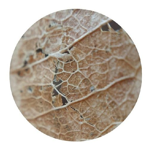 The ground is full of fallen leaves. Sgdryspell Dryspell