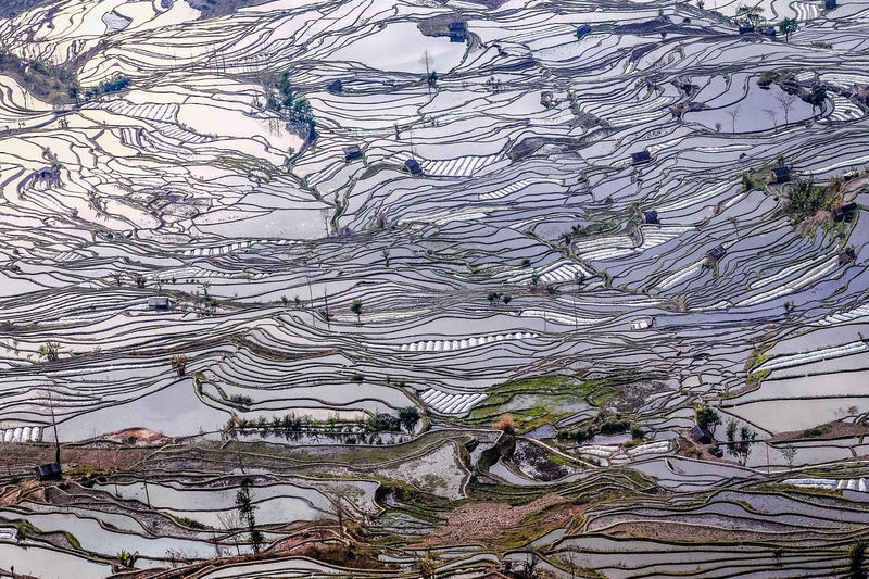 Tree No People Plant Day Growth Nature Architecture Built Structure Outdoors Beauty In Nature Terraced Field Field High Angle View Branch Land Landscape Building Exterior Pattern Tranquility Building Complexity My Best Photo