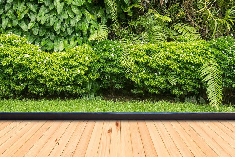 Plants growing on wooden floor